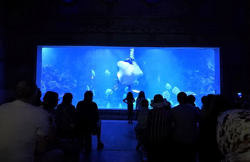 Shark feeding show daily at 11.00 and 15.00 in hurghada gran aquarium.