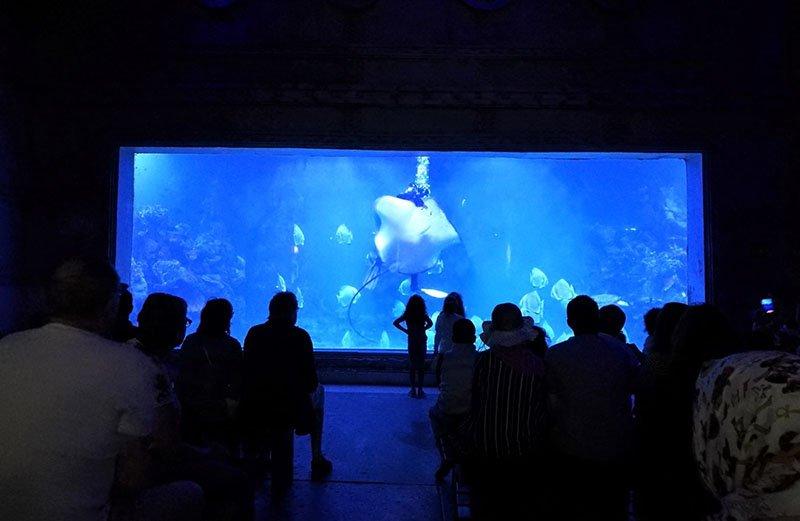 Haifischfütterung zeigen täglich 11.00 und 15.00 in Hurghada gran Aquarium.